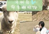 我和绵羊拍照啦!济州岛的特色咖啡馆推荐!