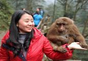 峨眉山的猴子很厉害,但是有了它,带上后不用怕被猴子抢