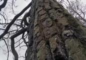 发生在四川凉山州木里县依吉乡的森林火灾死伤多少人
