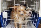 """这个一直宣扬""""不杀生""""的动物保护组织,为了腾地方杀了200多条狗……"""