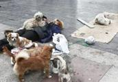 拾荒老人街头倒地身亡,这些流浪狗却不离不弃守护在一旁不让靠近