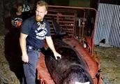 剖开鲸鱼肚子发现40公斤的海洋垃圾,对使用塑料的警钟!
