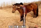 农村放马小伙趁爷爷不在,私自尝试骑马,一不小心意外悲剧发生了