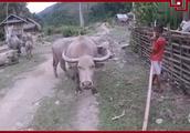 老挝号称亚洲最穷国家,看看老挝农村人住什么房子?不用一块砖头