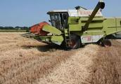 克拉斯小麦收割机,快速从秸秆上脱离谷粒