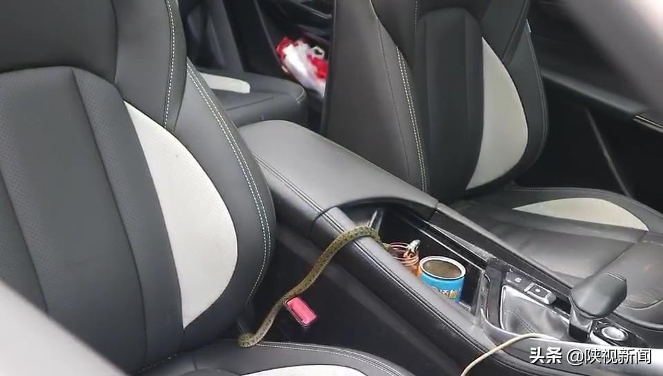 """惊恐万分!副驾驶竟然""""坐着""""一条蛇"""