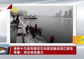 市民花万元买活鱼在松花江放生,专家:违法的