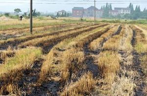 小小秸秆里面蕴含无限财富,老农民因此每年收获上百万