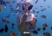 不要任何的执照,轻松地体验海底世界,长滩岛海底漫步